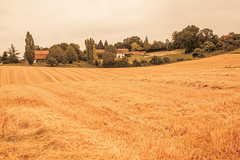 _Q9A5449 (gaujourfrancoise) Tags: france southwest sudouest charente fields champs été summer ocher ocre