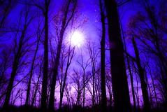 Wrong filter (tagg_el) Tags: haunting creepy woods