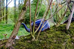 Woodland Brew (mdss68) Tags: kettle woods chorlton manchester fujix100t velvia