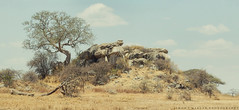 Crooked (simonjmarlan) Tags: africa landscape wide