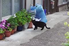 Today's Cat@2017-04-19 (masatsu) Tags: cat thebiggestgroupwithonlycats catspotting pentax mx1