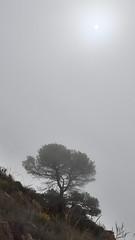 Solo bajo la niebla (Jose A. Parra) Tags: costablanca sierrahelada playa beach benidorm albir mountain climbing trekking senderismo sun sol niebla acantilado rocas