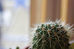 Hi everybody! Meet Steve! (jontan3) Tags: succulents plants pots