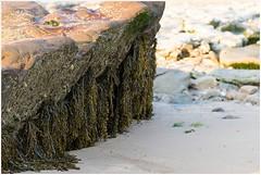 Algensporen (HP025635) (Hetwie) Tags: capblancnez opaalkust sea kust coast cotedopale capgrisnez cap frankrijk strand france zee audinghen hautsdefrance fr