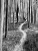 forest walk (sami kuosmanen) Tags: suomi sky snow sun spring finland forest heisanharju tree photography puu metsä path polku people woman girl walk hike trees trek icm nainen kävely tyttö intentional camera movement pine mänty