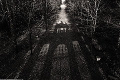 Shadow (Nicholas Rossetto) Tags: shadow ombra prospettiva perspective punto di fuga blackwhite bianconero monochrome monocromo bianco nero black white garden parco villa pisani strà nikon d7100 18140mm nicholasrossetto