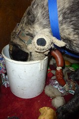 Hooch Re-Emptying! :-) (The Chairman 8) Tags: dog neck fur toys bucket paw body head leg canine ear sausages ropes brindle collar harness claws hooch dogtoys emptying alsationcross