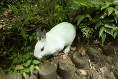 White Rabbit in Green (Zunten) Tags: rabbit green leaves japan zeiss tokyo foliage   minatoku  ricoh   gxr    minamiazabu    arisugawapark distagon418