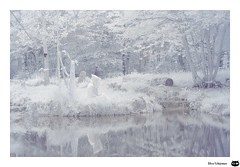 """L'invisible"" (Elise.Schipman) Tags: invisible bleu infrared paysage couleur infrarouge"