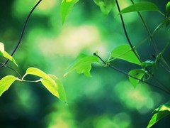 Midnight In the Garden (Venusian Lady) Tags: trees light green nature beauty leaves vines woods natural bokeh tones