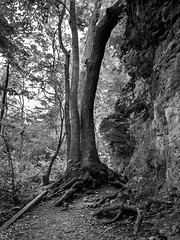 (BoydCarts) Tags: ohio blackandwhite tree nature stone spring availablelight decay olympus dayton em5 microfourthirds lumixg14f25