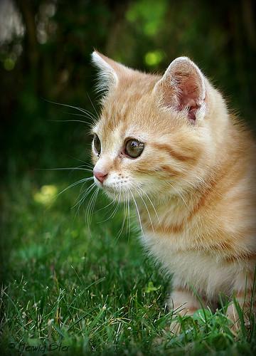 Nachbars Kätzchen