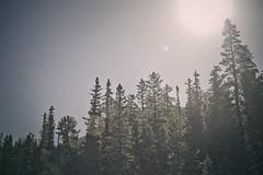 (Erin Drewitz) Tags: road trip travel light vacation forest colorado sunburst