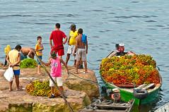 _3008207 (vermacsantos) Tags: life brazil people frutas fruits brasil boats landscapes amazon barcos paisagens amazonia amazonie amaznia brsil