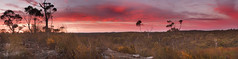 Wild Flowers || Blue Mountains Sunrise (edwinemmerick) Tags: longexposure flowers panorama nature photoshop sunrise canon eos bush stitch australia bluemountains le nsw 7d slowshutter newsouthwales wildflowers edwin sunup lansdscape woodford cs3 emmerick edwinemmerick 12shotpanorama