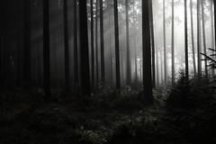 on my way... (seeker0204) Tags: light fog forest way licht nebel wald weg seeker0204