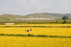 Road to Chongsan-Ri cooperative farm, Pyongyang / DPRK (anji) Tags: northkorea dprk democraticpeoplesrepublicofkorea