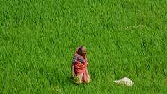 seeking ([s e l v i n]) Tags: old india green farm farming greenery oldwoman maharashtra agriculture cultivation igatpuri ©selvin tringalwadilake