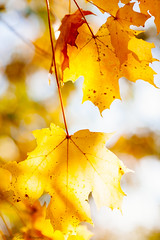 _MG_9947 (Bill Gagne Photography) Tags: autumn blackandwhite color colors leaves canon bokeh fallcolors autumnleaves autumncolors winelabels canonef135mmf2lusm vsco billsphotos canoneos5dmkll vscopresets billgagnephotography