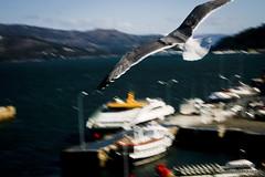 200803_00420_Porto_Vigo (Gonzalo Sanmartín Fidalgo) Tags: galicia gaviota vigo riadevigo puertodevigo
