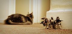 """""""Kitteh sighted!"""" (R D L) Tags: cat perthshire breeze megabloks callofduty fourseasonshotel lochearn"""