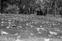 (Sonia Montes) Tags: madrid parque byn blancoynegro canon desenfoque foco