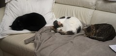 IMGP8788 (frankbehrens) Tags: cats tom cat chats kitten chat gatos gato katze katzen kater