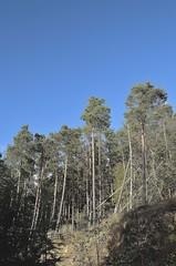 (ScreamingSoul) Tags: blue autumn trees sky dan scotland woods evergreen fir galashiels galahill howlieson