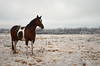 Baby girl (NutMegMae) Tags: winter horses horse snow ice horsey winterscape icesickles