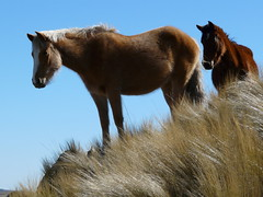 Chevaux (benontherun.com) Tags: horse argentina argentine caballo cheval chevaux lacarolina vision:outdoor=092 visio