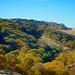Fall Colors in the Diablo Range