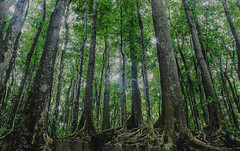 Man Made Forest (Dagon Hoyohoy) Tags: forest manmade