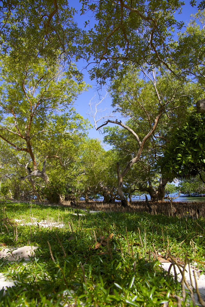 sojourners thought and mangrove island Food for thought for an empty soul  sojourners in space: annie dillard on what mangrove trees teach us about the human search for.