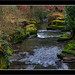 """Down in The Dene • <a style=""""font-size:0.8em;"""" href=""""https://www.flickr.com/photos/48350880@N06/12899178393/"""" target=""""_blank"""">View on Flickr</a>"""