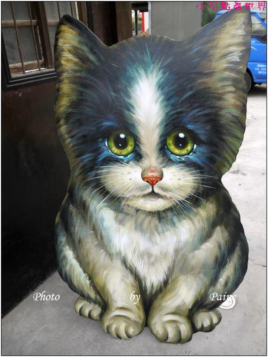 雲林虎尾屋頂上的貓 (30).JPG