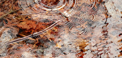 Somewhere Along the Way (joynerplanemaker) Tags: water rings reflection leaves drip