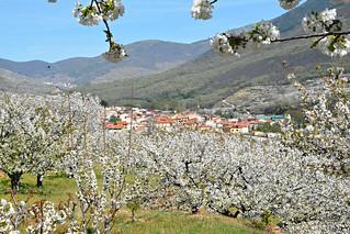 Valle del Jerte 30