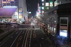 IMG_0517 (digitalbear) Tags: canon powershot g9x markii mark2 nakano dori sakura cherry blossom blooming fullbloom tokyo japan yozakura hanami