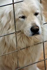 Poor Little Doggy (catherine4077) Tags: dog sanctuary pigsanimalsanctuary shepherdstown westvirginia sadface