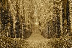 Par Contre en Somme (JDAMI) Tags: automne sépia contre somme 80 picardie france arbres allée extérieur nikon d600 tamron 2470