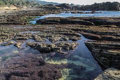 Tide Pool at Point Lobos, California (davidcmc58) Tags: pointlobos tidepool montereycounty california ocean pacific