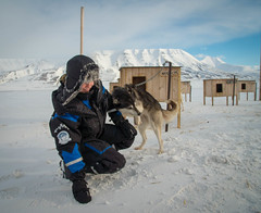 R0119661 (Micke Jonasson) Tags: spitzbergen svalbard dog sledge