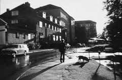 Walking the dog (Ken-Zan) Tags: donna lasarettet eskilstuna kirpol scanned kenzan ljunghav bror kjell sommarkväll amazon labrador