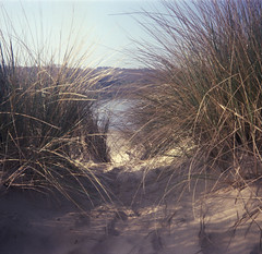 Just being there (Mark Dries) Tags: markguitarphoto markdries 6x6 dacoradignai fuji nhp expired mediumformat sand dunes