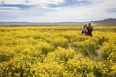 Yellow - Carrizo Plains (lycheng99) Tags: carrizo plains national monument carrizoplainsnationalmonument flowers yellow yellowflowers women youth young portrait photography photographer landscape sky outdoors summer warm