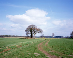March (Rosenthal Photography) Tags: bäume 6x7 ff120 asa100 märz landschaft twiste wense städte fujiprovia100f anderlingen 20170402 pflanzen mamiya7 analog dörfer siedlungen 12months landscape spring march tree lonelytree color colour 12month nature fields mamiya fuji provia epson v800