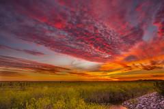 An Epic Sunset - Everglades National Park (Xiang&Jie) Tags: sunset everglades evergladesnationalpark nationalpark florida grassland sky epicsunset epic stunning