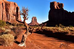 CHERISH IT ... (Aspenbreeze) Tags: monumentvalley utah landscape rockformations redrocks redsand monumentvalleyutah nature rural navajoland navajocountry bevzuerlein moonandbackphotography aspenbreeze
