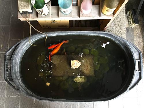 Taipei goldfish
