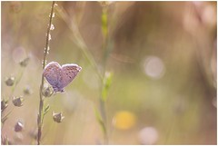 butterfly (Photo Luc@) Tags: butterfly lens diaplan vintage f28 macro green allaperto canon 6d bokeh light